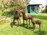 Willow Deer Family