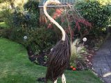 Willow Heron 1