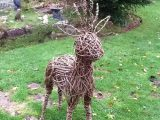 Willow Reindeer