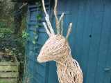 White Willow Deer head