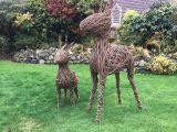Willow Reindeer 2