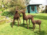 Willow Deer Family
