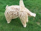 Willow pig