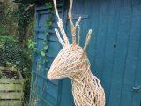 White Willow Deer head